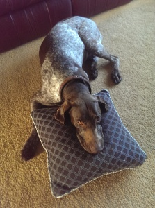 Gretchen on Pillow